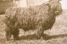 Am Proiseil Riabhach of Killundine