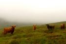 Highlanders in the Highlands