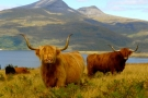 Highlanders in the Highlands