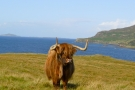 Highlander in the Highlands