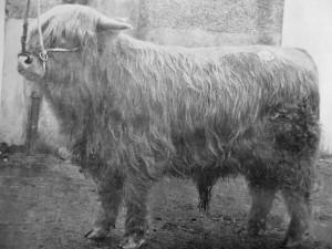 web_Ghille Buidhe of Glenforsa