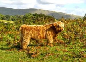 web_Ruaridh Mor of Glengoyne